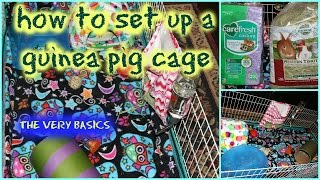 How To Set Up A Guinea Pig Cage | The Basics