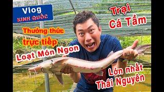 Thưởng thức trực tiếp loạt món ngon tại trại cá Tầm lớn nhất Thái Nguyên | Kinh Quốc Vlog