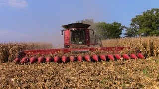 Two Case IH 9240 Combines with 4416 16 row Corn Heads