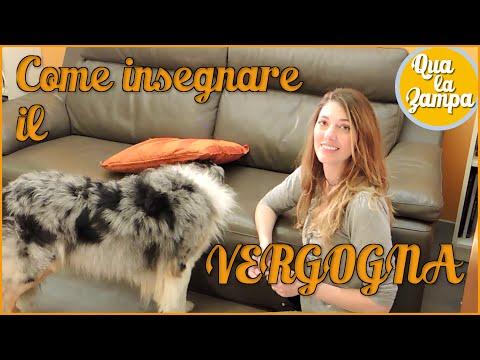 Come insegnare il VERGOGNA - Addestramento Educazione cani n° 21 | Qua la Zampa