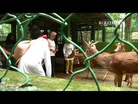 Video Di Taman Ini Ada Budidaya Murbei & Ulat Sutra