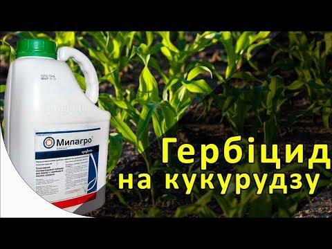Милагро - гербицид на кукурузу. Сингента