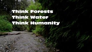 Think Forests (1min, 48sec)