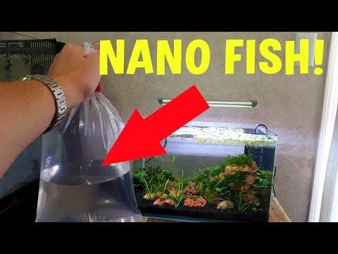 NEW NANO FISH! - NANO AQUARIUM UPDATE