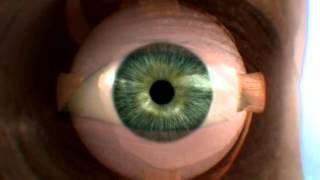 La visión - Documental el Cuerpo Humano al Límite de Discovery Channel