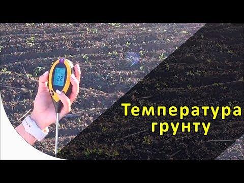 Температура почвы для посева