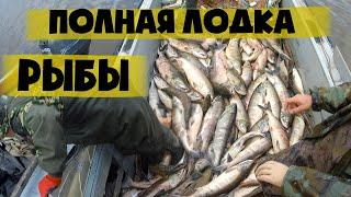 Рыбалка на косу в кызылкумском канале у чардары
