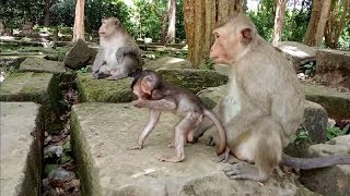 Why Baby Monkey Love Sister Then Mother ? ST363