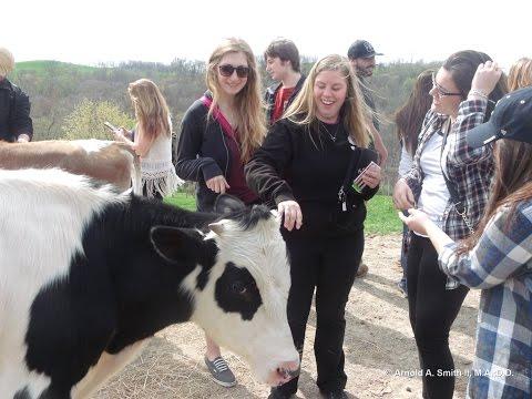 Ethics and Cow Protecion