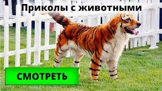 Самые смешные приколы с котами и собаками, видео для детей с животными