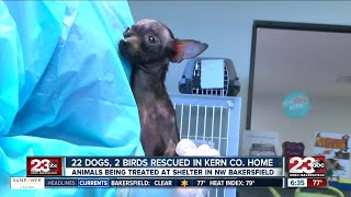 Dozens of animals rescued from home
