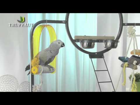 comment prendre soin d'un bébé oiseau