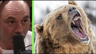 Joe Rogan - What To Do If Youre Attacked By A Grizzly Bear