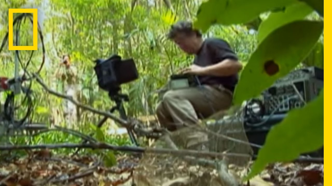 How to Film Insects | National Geographic thumbnail