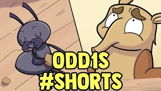 Anteater #shorts