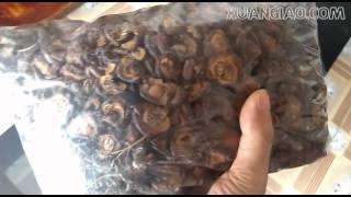 preview picture of video 'Táo mèo khô Mù Căng Chải   Yên Bái'