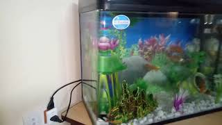rs 600 el aquarium - 免费在线视频最佳电影电视节目 - Viveos Net