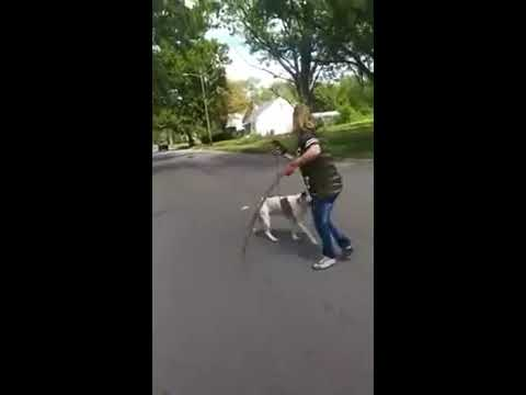 Pitbull protects owner from a stray dog while cameraman gives great play-by-play