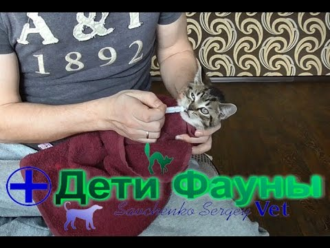 Как вывести глистов у маленького котенка