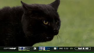 Cat Runs Onto the Field & Interrupts Game | Cowboys vs. Giants | NFL