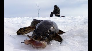 Ловля налима зимой на стукалки
