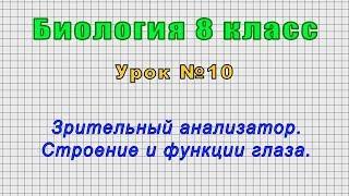 Биология 8 класс Урок 10