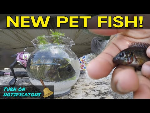 Catching Pet Exotic Fish for Aquarium