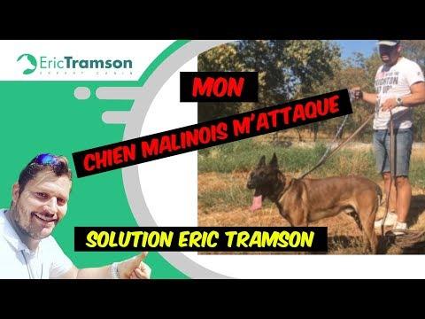MON CHIEN MALINOIS M'ATTAQUE /ME MORD/ERIC TRAMSON/EDUCATEUR CANIN CHIEN AGRESSIF