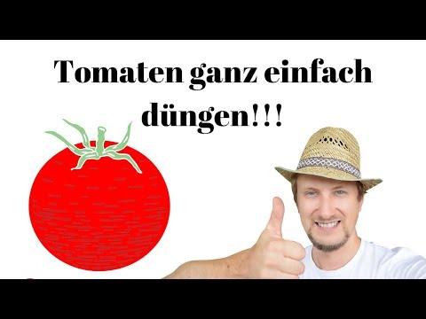 Tomaten richtig düngen 🍅 Meine einfache Anleitung!