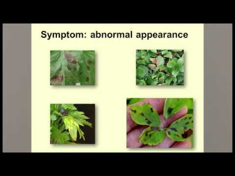 Video Guidelines for Diagnosing Plant Problems