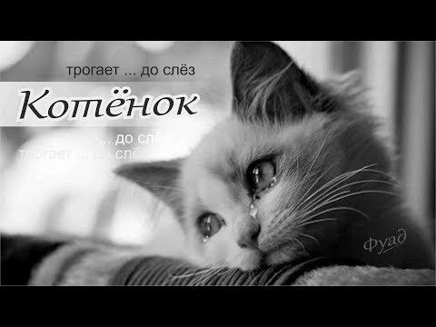 Котёнок. Песня, которая дотрагивается до души.