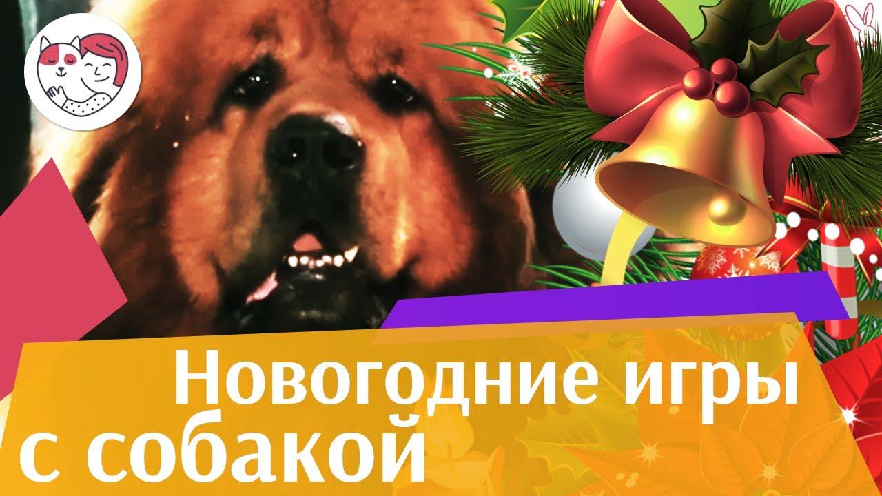 4 идеи для игр дома с собакой в праздничные дни на ilikepet