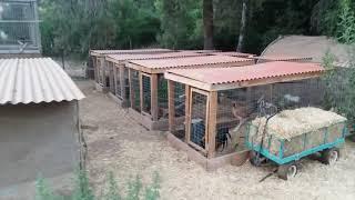 gamefowl farms in america - मुफ्त ऑनलाइन