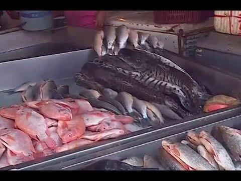 Pese a sequia, el pescado abunda en Barranquilla - Noticias Caracol