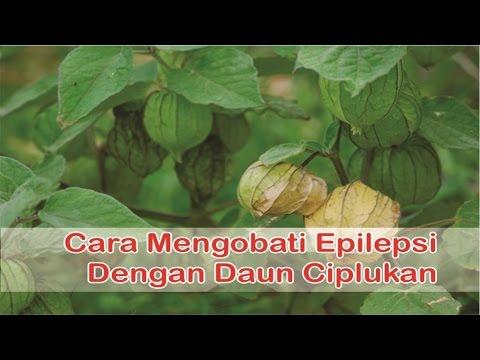 """Video """"Obat Epilepsi Herbal"""", Cara Cepat Mengobati Epilepsi Dengan """"Manfaat Daun Ciplukan"""""""