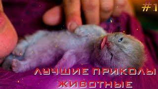 Лучшие приколы животные /Приколы/Ржака До Слез/Подборка Приколов/Нарезка Приколов #1