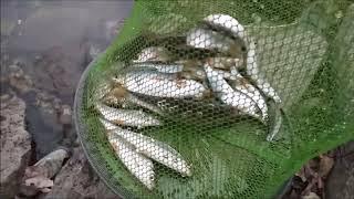 ловля зимней плотвы на пикер   рыбалка в Запорожье