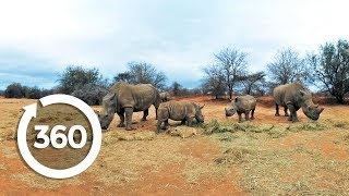 Caring for Rhinos | Discovery VR (360 Video)