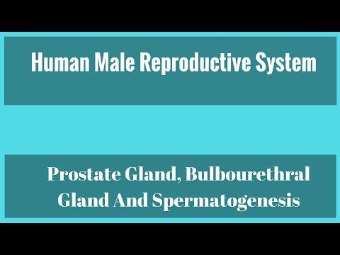 Devices Medical prostate massage