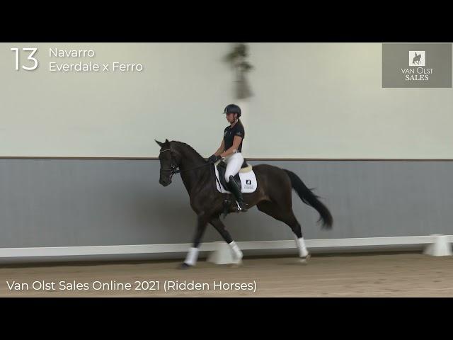 Navarro under saddle