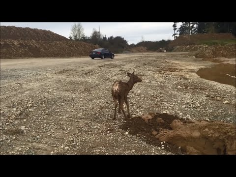 Excavator Rescue of Young Deer