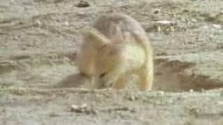 Desert - Animals