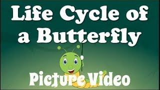 THE LIFE CYCLE OF A BUTTERFLY - NEW PICTURE VIDEO