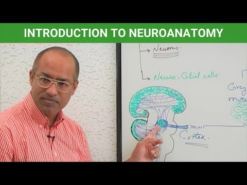Introduction to Neuroanatomy – Central Nervous System