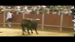 preview picture of video 'Fiestas Meco 2014 Encierro Nocturno entrada Plaza   Toro 2'