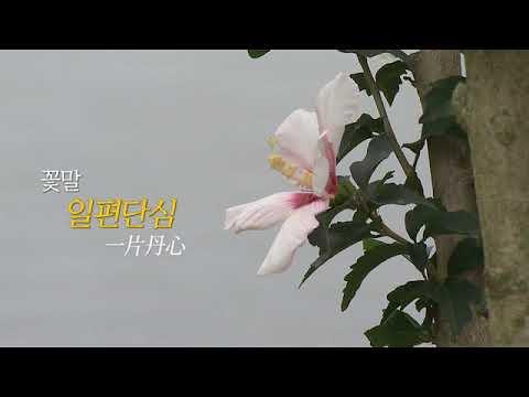 안동의 정신문화_무궁화