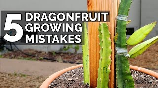5 Dragon Fruit Growing Mistakes to Avoid