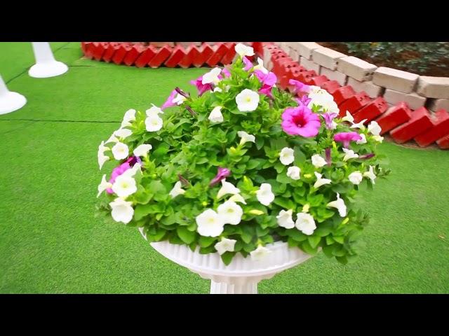 Số 1 Chuẩn bị lễ hội hoa xuân Mậu Tuất 2018 chùa Khai Nguyên