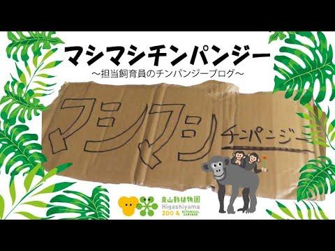 【東山動植物園公式】マシマシチンパンジー『第1回~ヤサイマシマシ~』前編