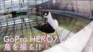 GoPro HERO7で掛川花鳥園をざっとまわってみた。スローもあり!